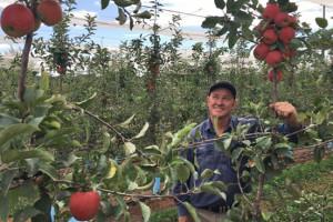 Bernard-Hall-with-Kanzi-apple-variety