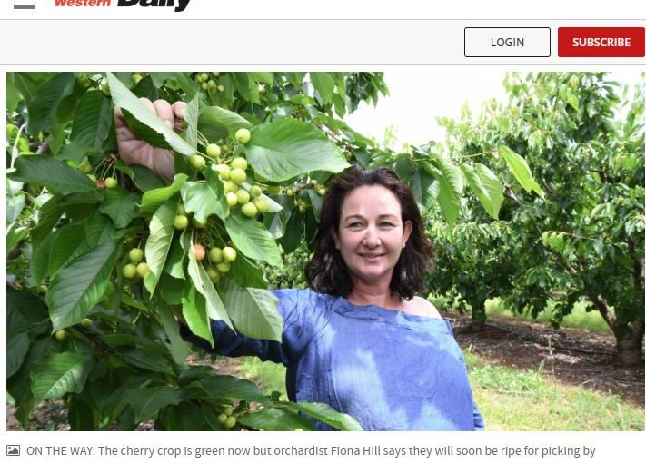 Media Source: Central Western Daily Cheaper cherries this Christmas as export demand increases