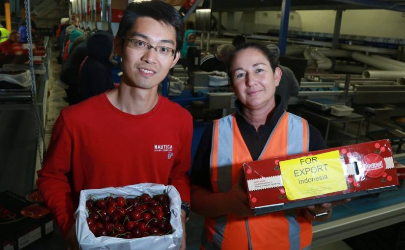 Media Source CWD: Chinese orchard owner plans more investment in Orange cherries